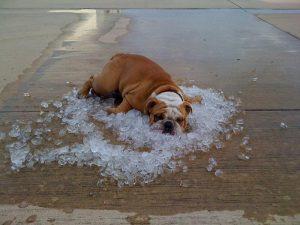 hond-heeft-het-warm